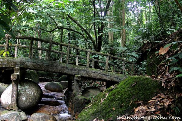 frim-kepong-hutan-simpan-bukit-lagong-alamsemulajadi-nature-hiking-air-terjun-sungai-kroh-01