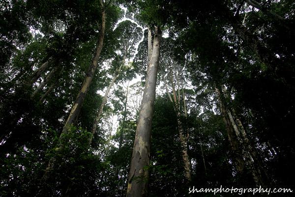 frim-kepong-hutan-simpan-bukit-lagong-alamsemulajadi-nature-hiking-air-terjun-sungai-kroh-05