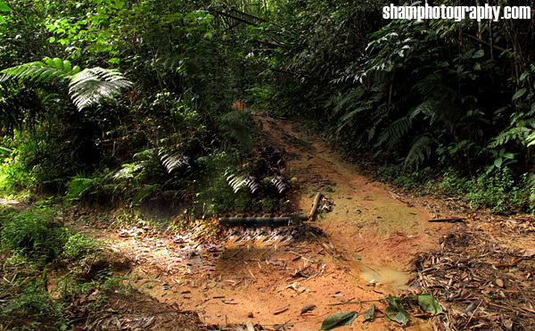 lata-medang-kg-pertak-kuala-kubu-bharu-fraser-hill-hiking-nature-outdoor-adventures-shamphotography