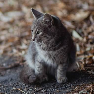 Thème WordPress: Refuge pour animaux
