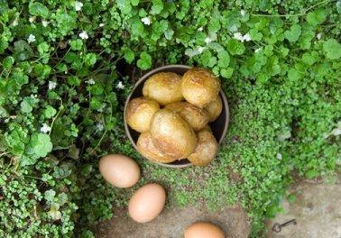 Frances-Hodgson-Burnett-Gizli-bahce-yemek-sofrasi