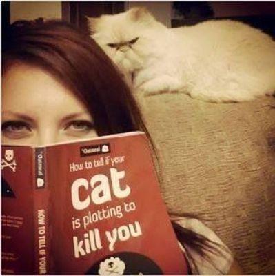 angry-cat-reading-kedi-kitap-okuyor-23