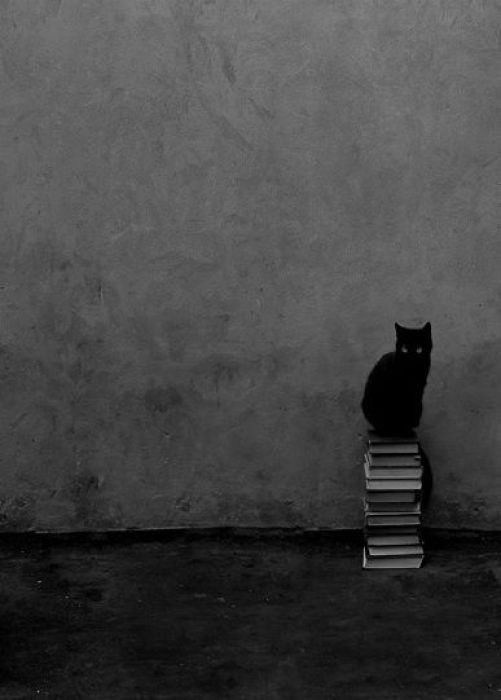 cat-and-books-53