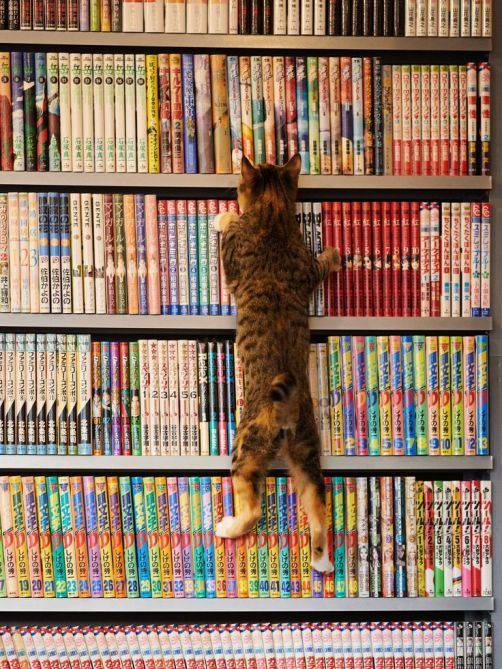 cat-and-books-58