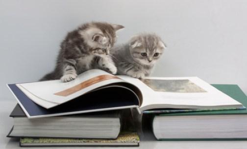 cat-reading-book-kedi-kitap-okuyor-52