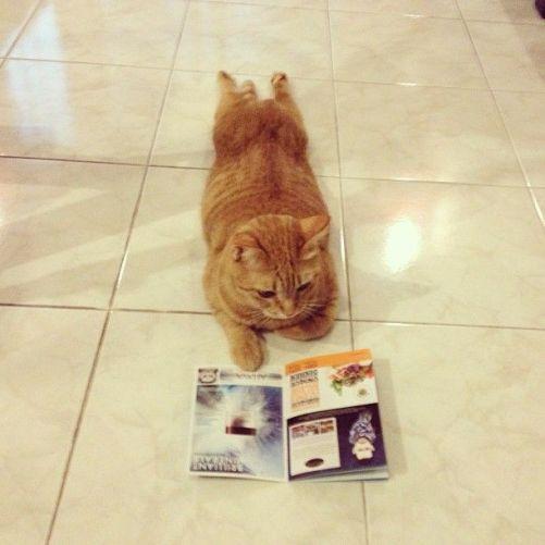cat-reading-book-kedi-kitap-okuyor