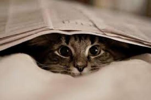cat-reading-kedi-kitap-okuyor-16