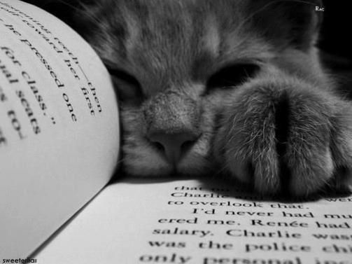cat-reading-kedi-kitap-okuyor-18