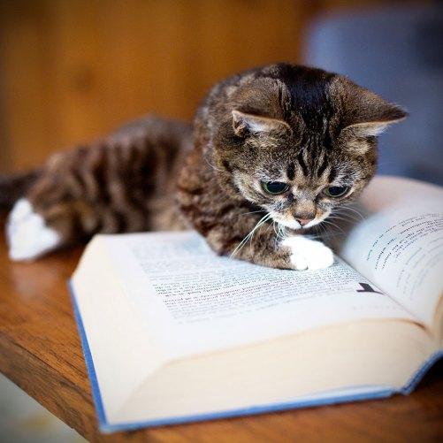 cat-reading-kedi-kitap-okuyor-25