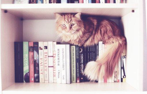 cat-reading-kedi-kitap-okuyor-31