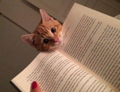 cat-reading-kedi-kitap-okuyor-40