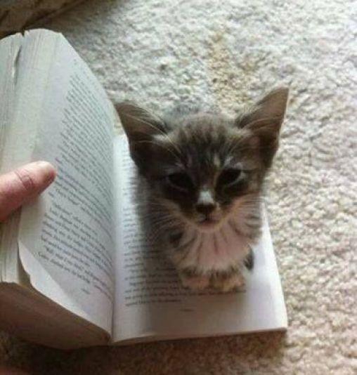 cat-reading-kedi-kitap-okuyor-42