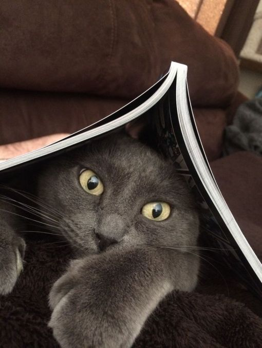 cat-reading-kedi-kitap-okuyor-44
