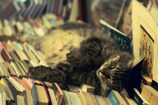 cat-reading-kedi-kitap-okuyor-45