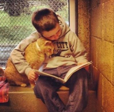 cat-reading-kedi-kitap-okuyor-6