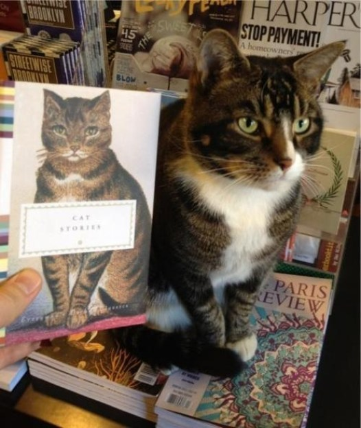 cats-and-books-3
