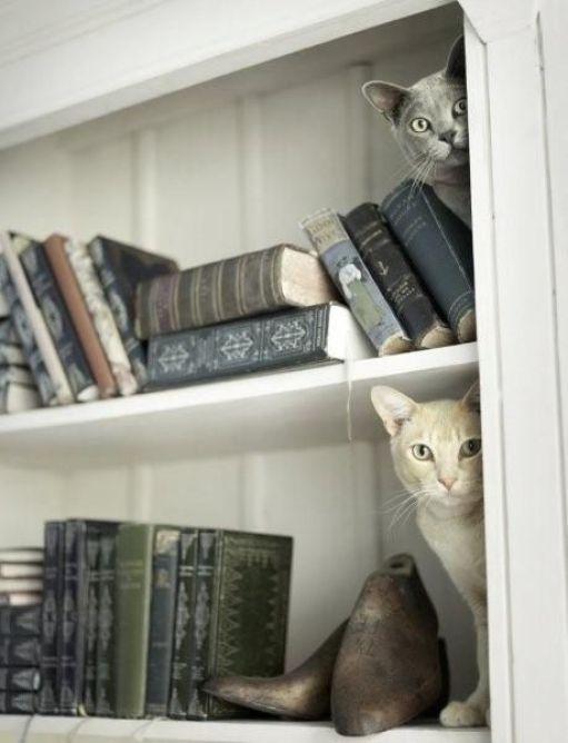 cats-and-books-kitaplar-ve-kediler