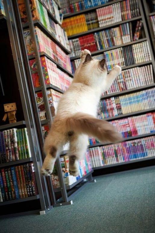cats-book-kedi-kitap-50