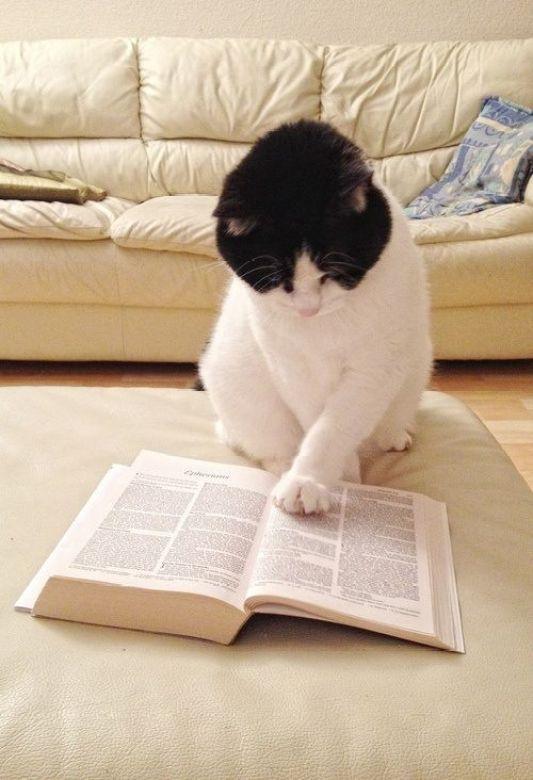 kitap-kedi-books-cats-8
