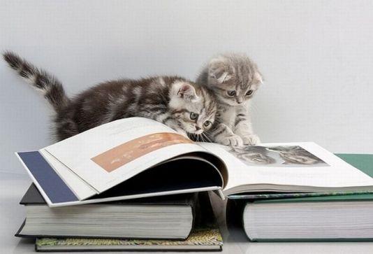 kitty-reading-kedi-kitap-okuyor-14