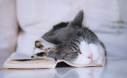 sleeping-cat-reading-book-uyuyan-kedi-kitap-okuyor-3