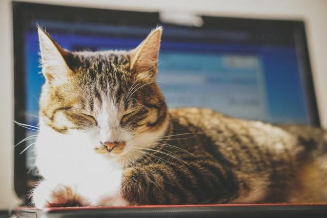 正しいパソコン姿勢は疲れない