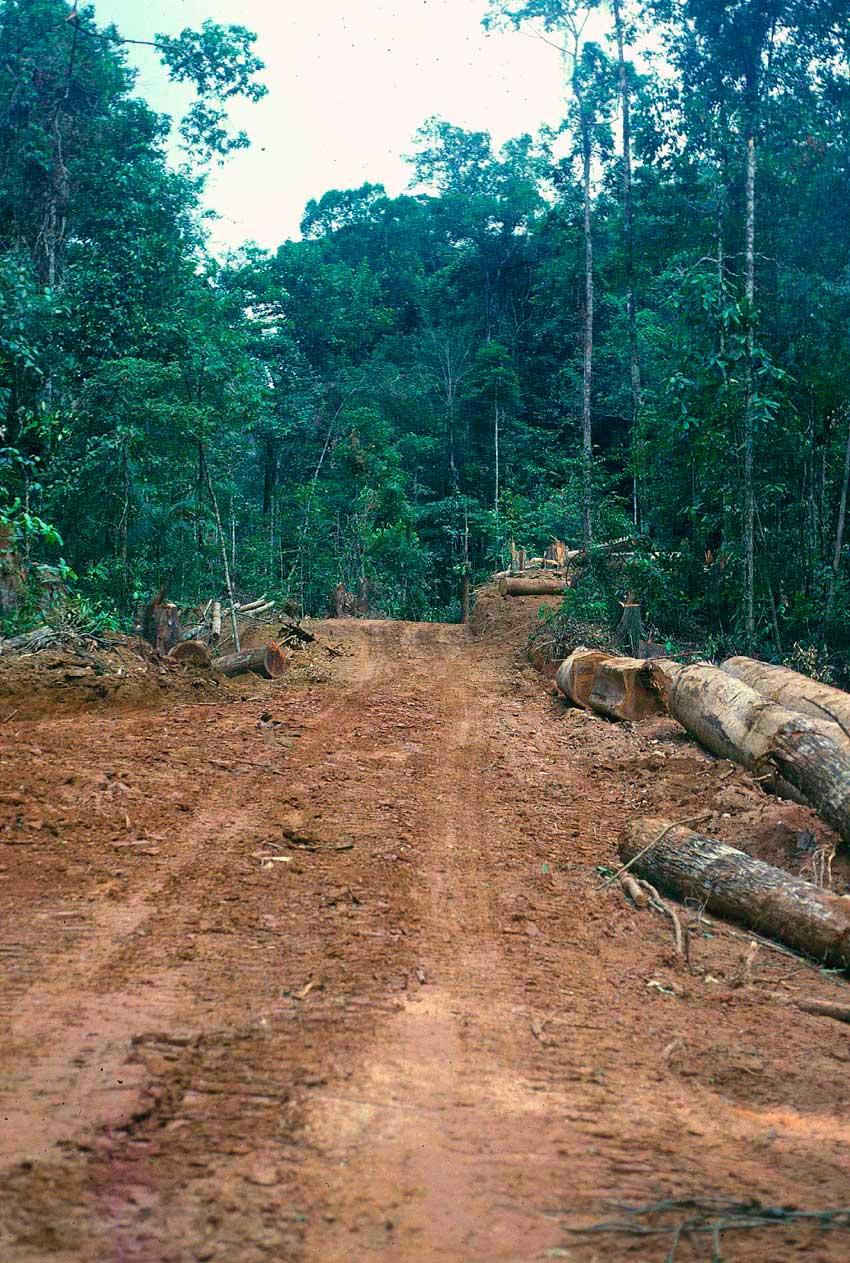 Logging road