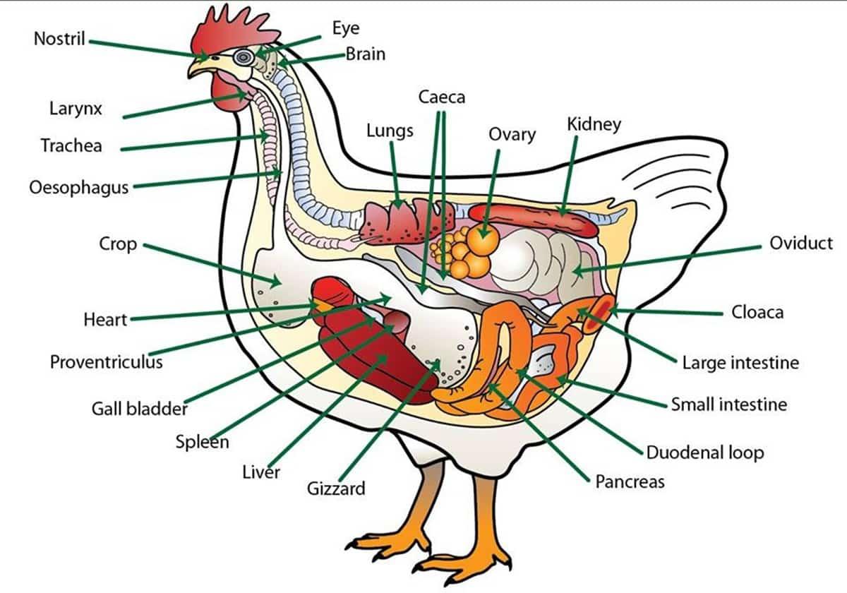 """Animal Body Parts"" Vocabulary in English 19"