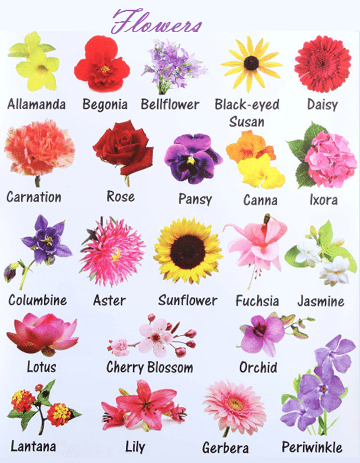 Learn English Vocabulary through Pictures: Flowers