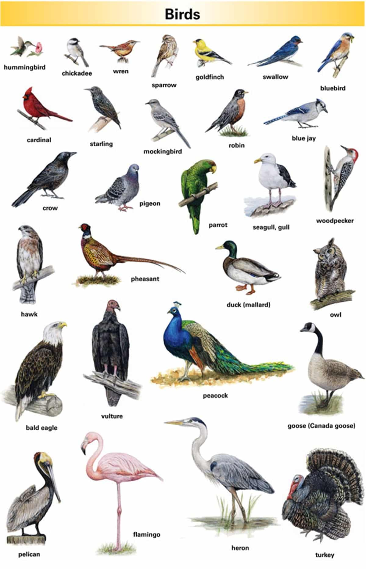 Learn English Vocabulary through Pictures: 100+ Animal Names 18