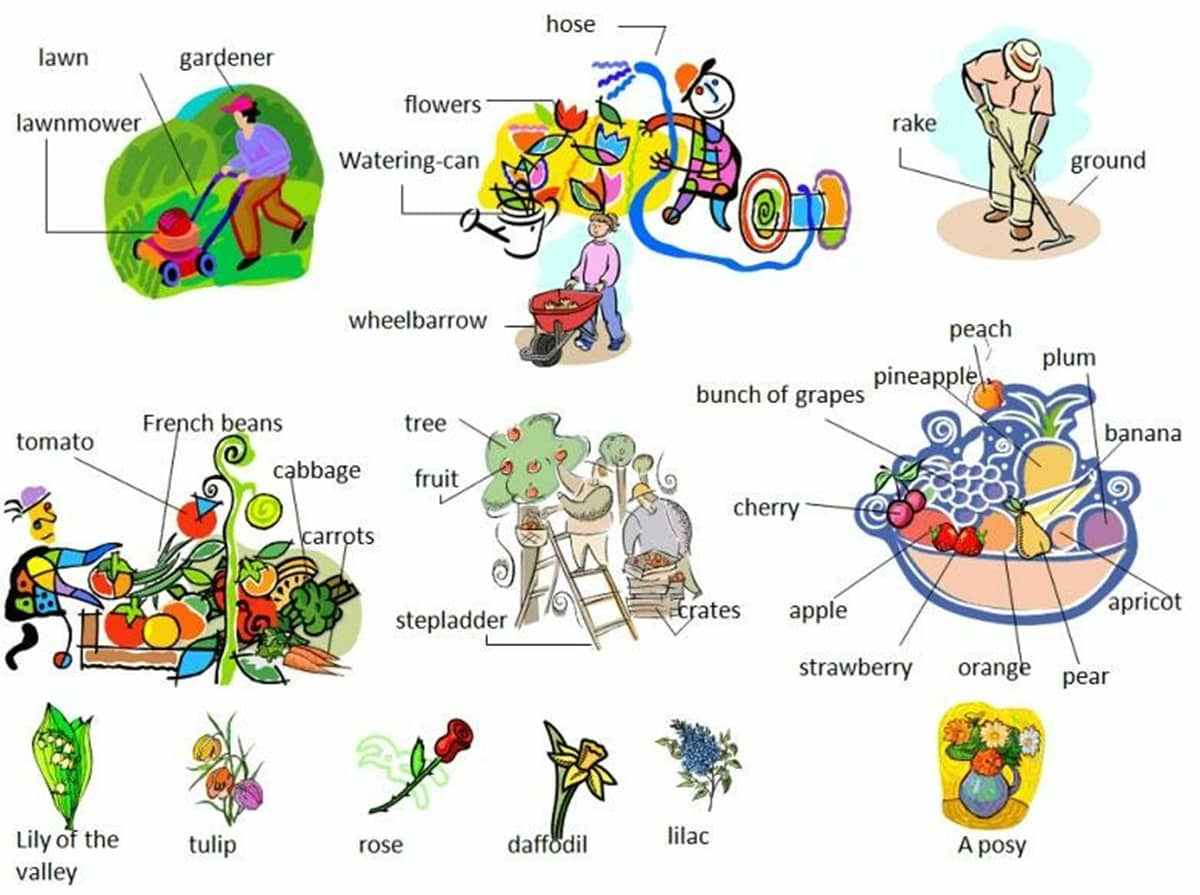 In The Garden Vocabulary