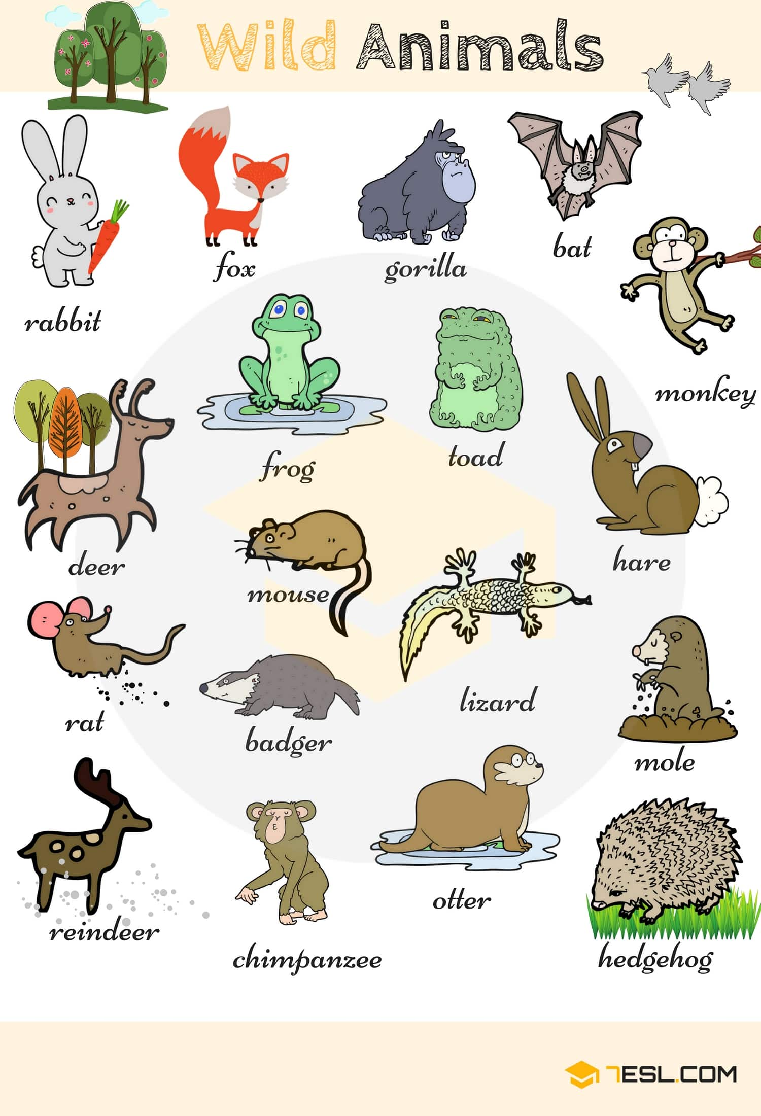 Wild Animal Vocabulary In English