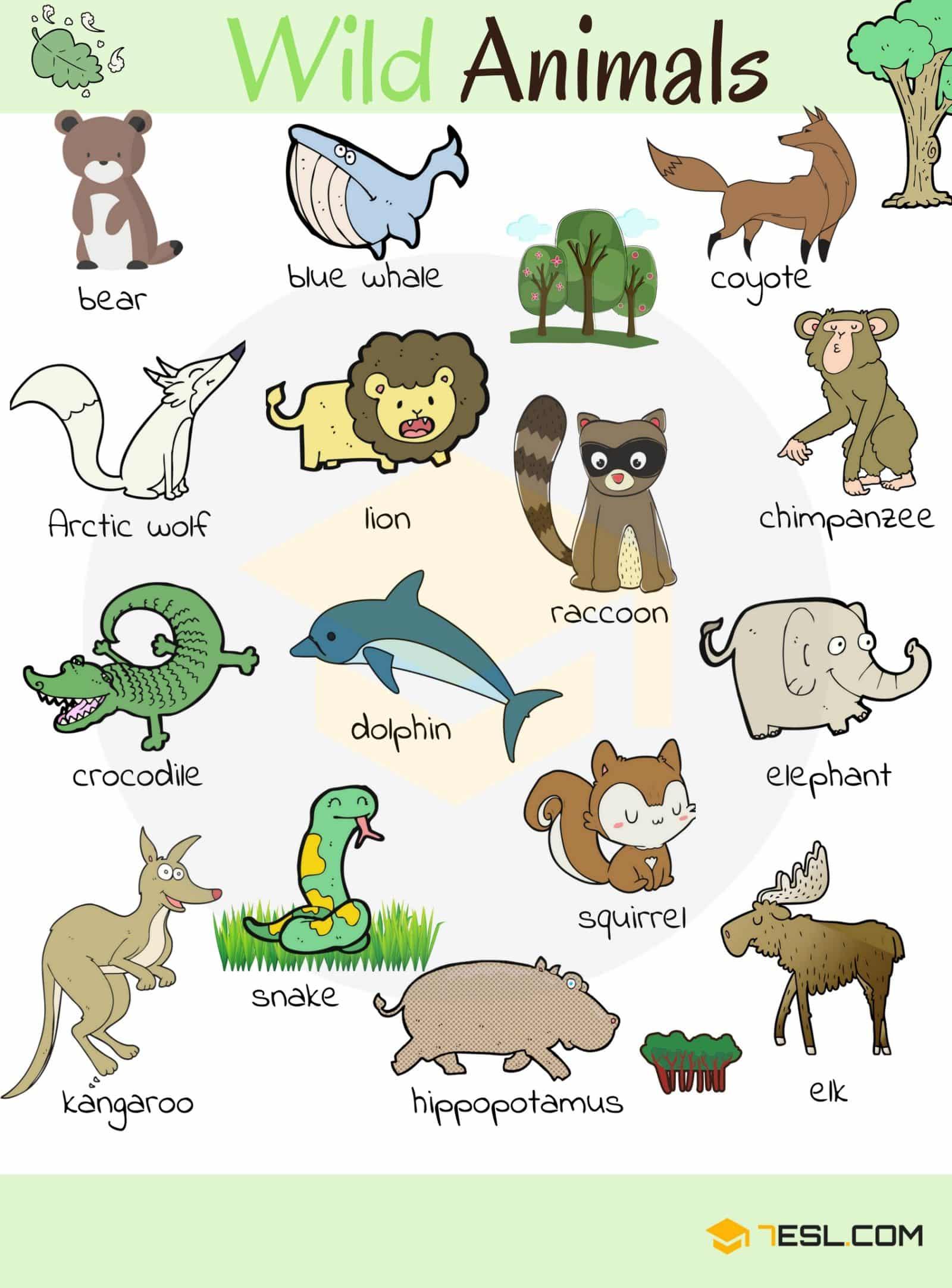 Wild Animal Vocabulary In English