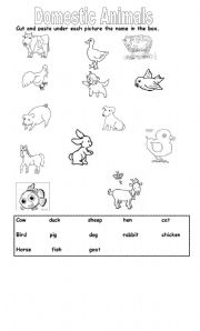 Domestic animals worksheets