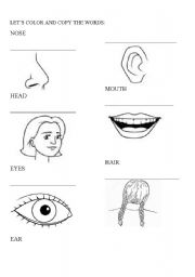 English worksheets: PARTS OF YOUR FACE