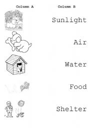 English worksheets: Living things