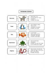 Vertebrates worksheets