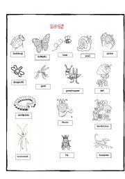 Bugs worksheets