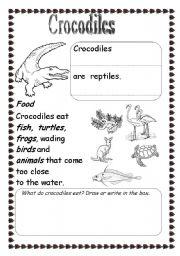 English worksheets: Crocodiles
