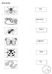 English worksheets: Insects Vocabulary