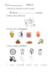 English worksheets: 1ST GRADE SCIENCE. SENSES. SMELL