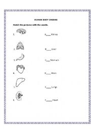 Body organs worksheets