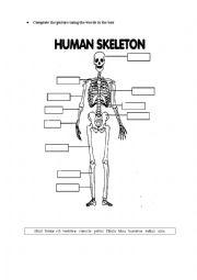 The skeleton worksheets