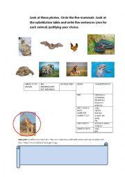 Mammals Worksheets