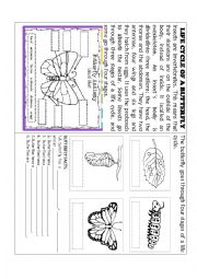The life cycle worksheets