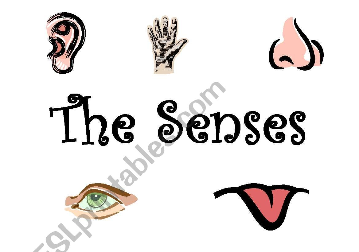 English Worksheets The Senses