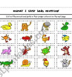 Animal Coverings Worksheet Educationcom - induced.info [ 821 x 1169 Pixel ]