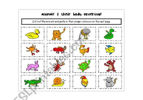 small resolution of Animal Coverings Worksheet Educationcom - induced.info