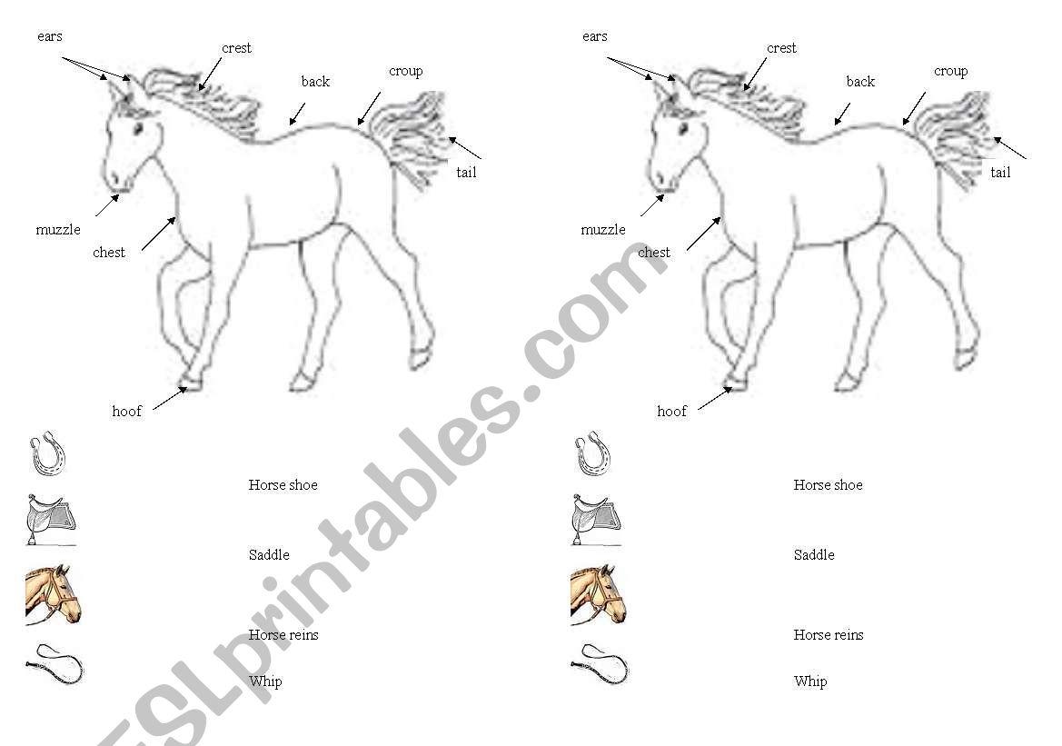 English Worksheets Horse Vocabulary Sheet