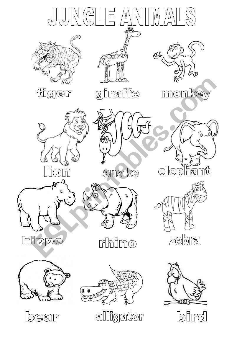 English worksheets: Jungle Animals Coloring Sheet